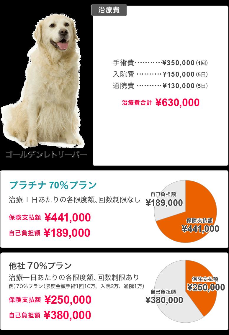 犬 白内障 手術 費用